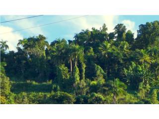 Land for sale 7050 m/c  – 1.79 cds Rio Grande