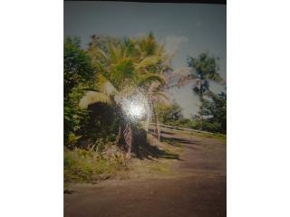 Se vende 2 CD de terreno en Arecibo