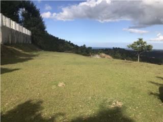 Carruzo Puerto Rico