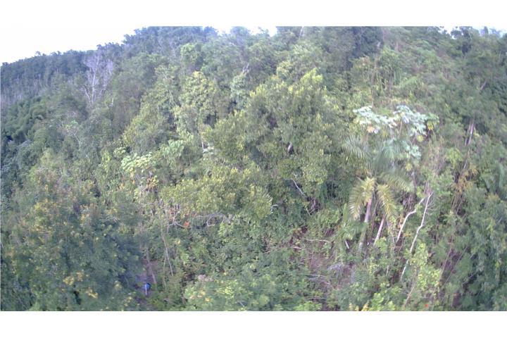 Rio Lajas Puerto Rico