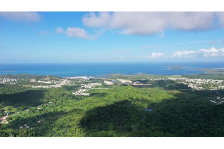 Machos De Ceiba Puerto Rico
