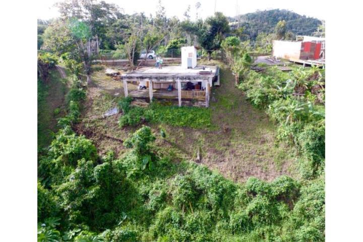 Cercadillo Puerto Rico