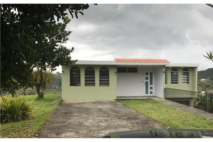 Cedro Arriba Puerto Rico