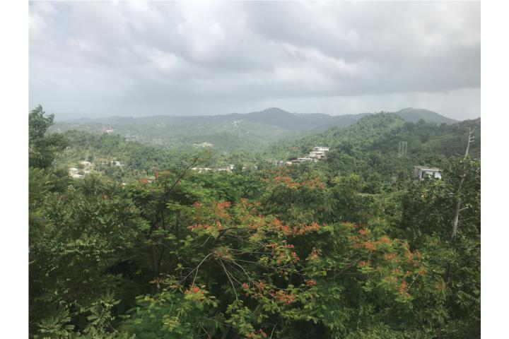 Los Ramos Puerto Rico