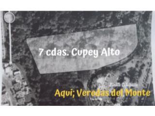 CUPEY ALTO/ URBANO!!!
