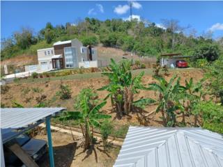 Bo.Ceiba Norte,  Juncos