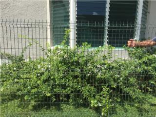 Se venden 11 paneles de Verja, Puerto Rico