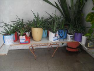 GANGA! Se venden 25 plantas multiusos, Puerto Rico