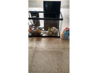 pecera ideal para goldfish, guppys, betas 70$, Puerto Rico