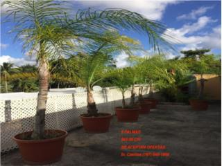 Se venden 9 palmas, Puerto Rico