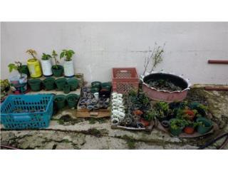 Quieres comenzar tu jardín o nuevas plantas?, Puerto Rico