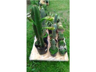 Cactus ,Agaves y Suculentas, Puerto Rico