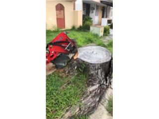 Stump grinder, Puerto Rico