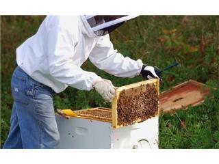 se venden colmenas de abejas, Puerto Rico