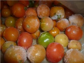 Plantas de Cherry Tomato $2, Puerto Rico