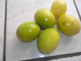 Plantas de Parcha Colombiana $2, Puerto Rico