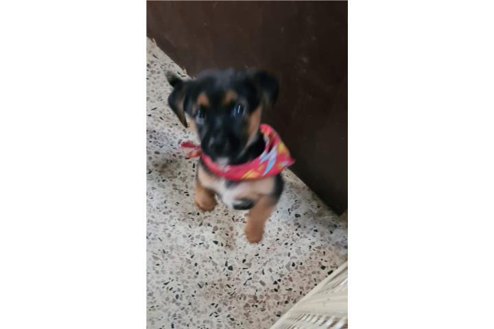 Grande United Pets Las Mascotas Pappy Perro Cuenco Color Gris