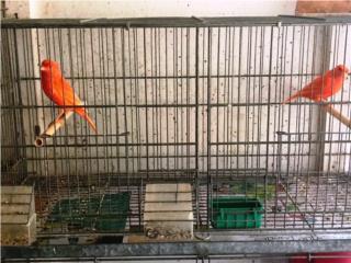 Aves/Birds Puerto Rico