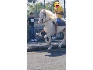 Caballos/Horses Puerto Rico
