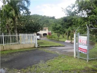 Bo. Cacao Carr 853 Km. 4.4 Sector Hoya Fria