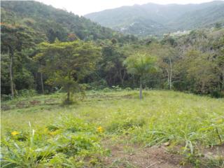 Alquler de terreno agricola 5cds