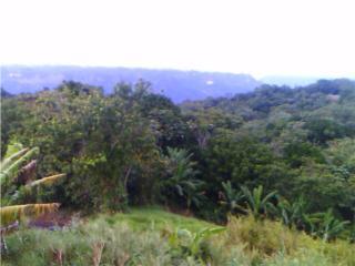 Se vende Finca en Sabana Grande