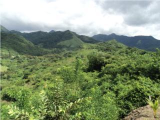 Terreno agricola 300 cuerdas Penuelas,PR