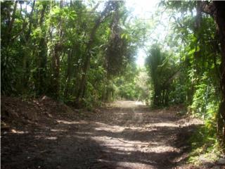 Sector Las Cuevas