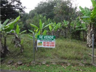 Sector Polo Rodriguez. TASADO