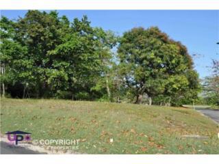 Corner Lot, Great Price! Dorado Country Estates