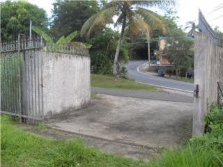 MAMBICHE BLANCO, cerca de Humacao y Las Piedras