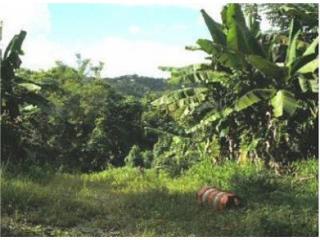 Bo Jaguas Carr 941 Km 10.1