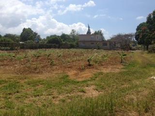 Solar Sect Samot Isabela