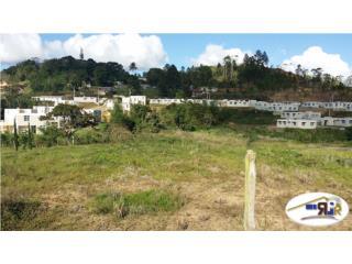 Barrio Llanos Sector Serralles