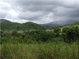 DAGUAO LOS MILLONES FINCA 5 .22 CUERDAS