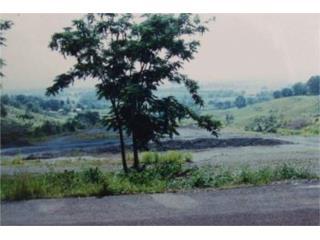 Bo. Guanajibo sector Sabana Alta      CR