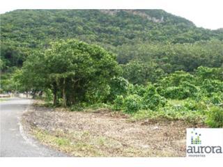 SR 10 Km 79.8 ESQ SR 6609 Hato Viejo WD