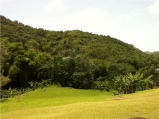 Solar semi llano,Guaman�