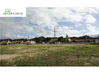 4.54 cuerdas en Barrio Algarrobo de Vega Baja