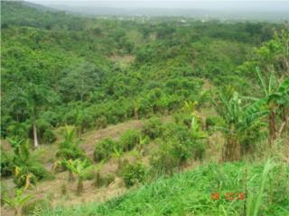 Bo. Guatemala, Sector Paseo Real