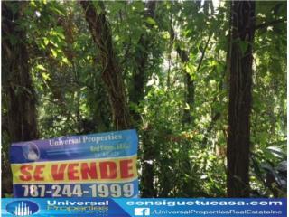 BO LIMON - UTUADO - FINCA - LLAME HOY