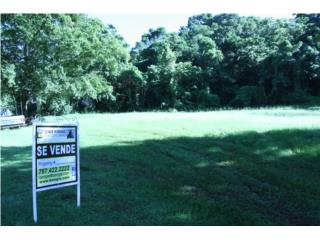 For Sale! 1687.50 sqm Land Lot Caimital Bajo