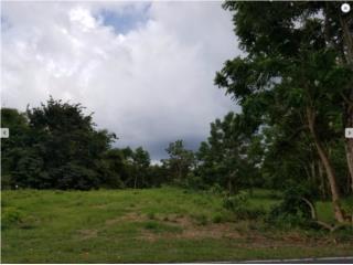 Solar, Bo. Guayabo, Aguada PR 2250 sq. m.