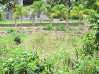 Urb. Lomas de Manatuabon Lote 25