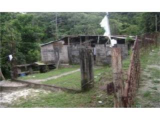 Bo. Maraguez, Sector El Collado, carretera 139