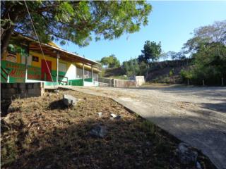 Bo. Llanos Tuna Carr 103 Int. Campo y Tranquilo