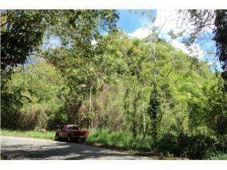Calle 443 km.7.4 Bo. Caimital Bajo Aguadilla