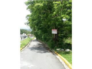 BO. CEIBA RD 189 KM 21.4 -FINCA DE 6 CUERDAS!
