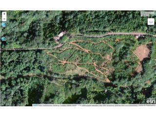 Hacienda Bibiloni, 13 cuerdas.