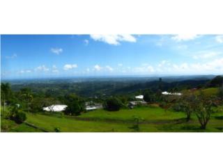 Palma Sola Canovanas,Vista Panoramica 5h,4.5b
